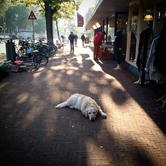 Theresiastraat, Den Haag