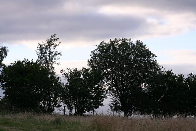 2015_08_15_11