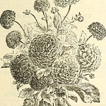 "Image from page 98 of ""Dreer's garden calendar : 1886"" (1886)"