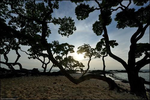 trees sunset landscape hawaii scenery bigisland kukiopoint