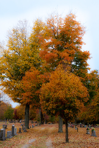 Fall in the Cemetery