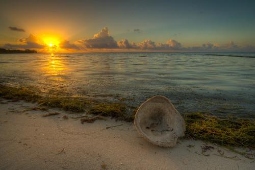 hdr sponge sea grass beach bahia honda state park sunrise vasesponge