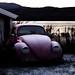 Pink bug in winter sleep by Torbjørn Tiller