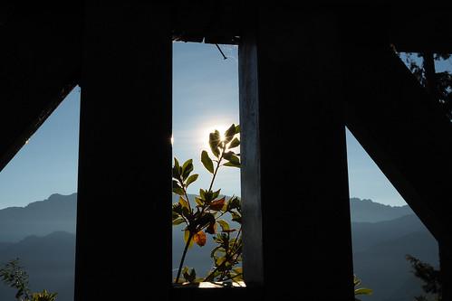 olympus penf 25mm f12 pro 2512pro 阿里山 alishan 森林小火車 chiayi 嘉義 taiwan 台灣 日出 sunrise dwan