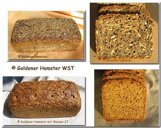 Goldener-Hamster-neu0 | by MarlaL2106