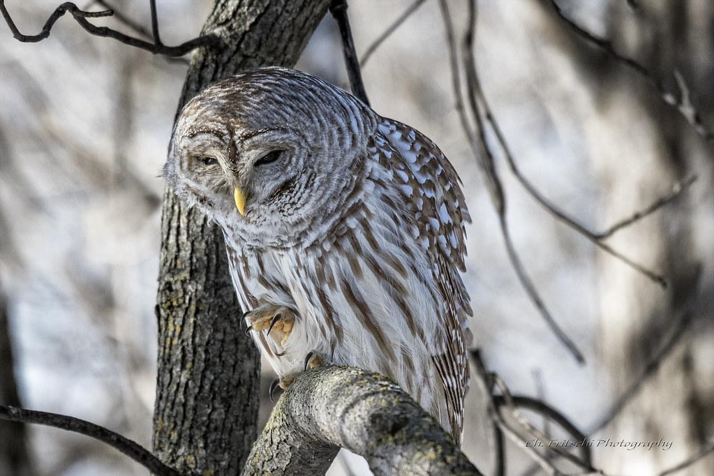 Owl Forum De