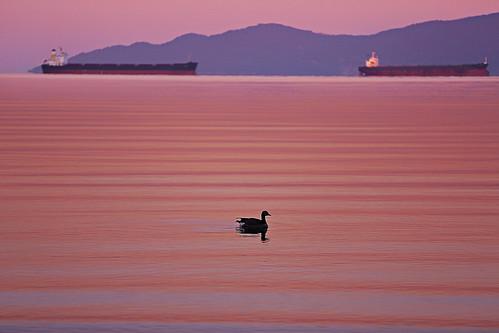 rhythmofredtide sunrise englishbay vancouver britishcolumbia canada canon5dmarkiii 70200mmf28lisii ocean ships waves canadagoose bird water lifeng travel