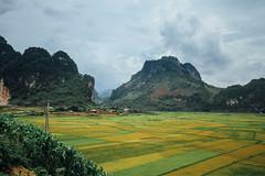 Colorful Rice Paddies, Lai Châu Vietnam
