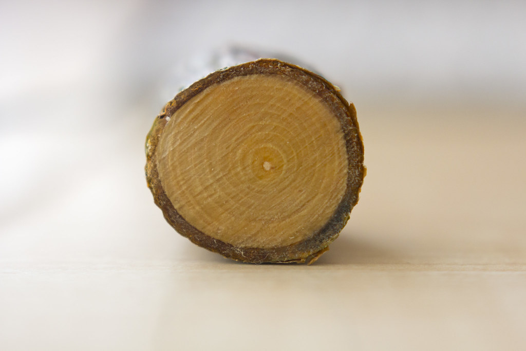 Dendrochronology The Dating Of Trees By Counting Th