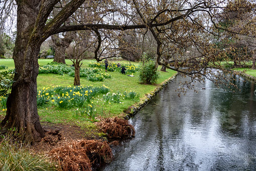bridge flowers trees newzealand christchurch sky water reflections river spring daffodils monavale avonriver