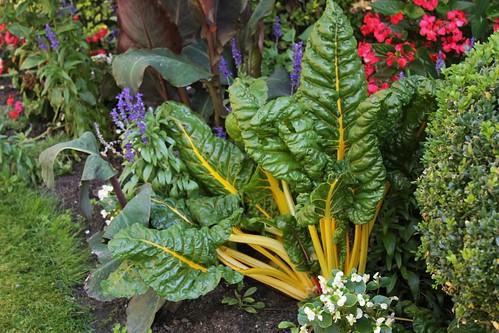 légumes et condiments décoratifs  22010506143_2eb2f476ba