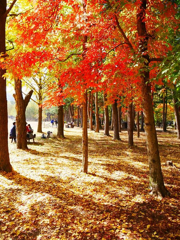 Mùa thu Hàn Quốc ở Nami