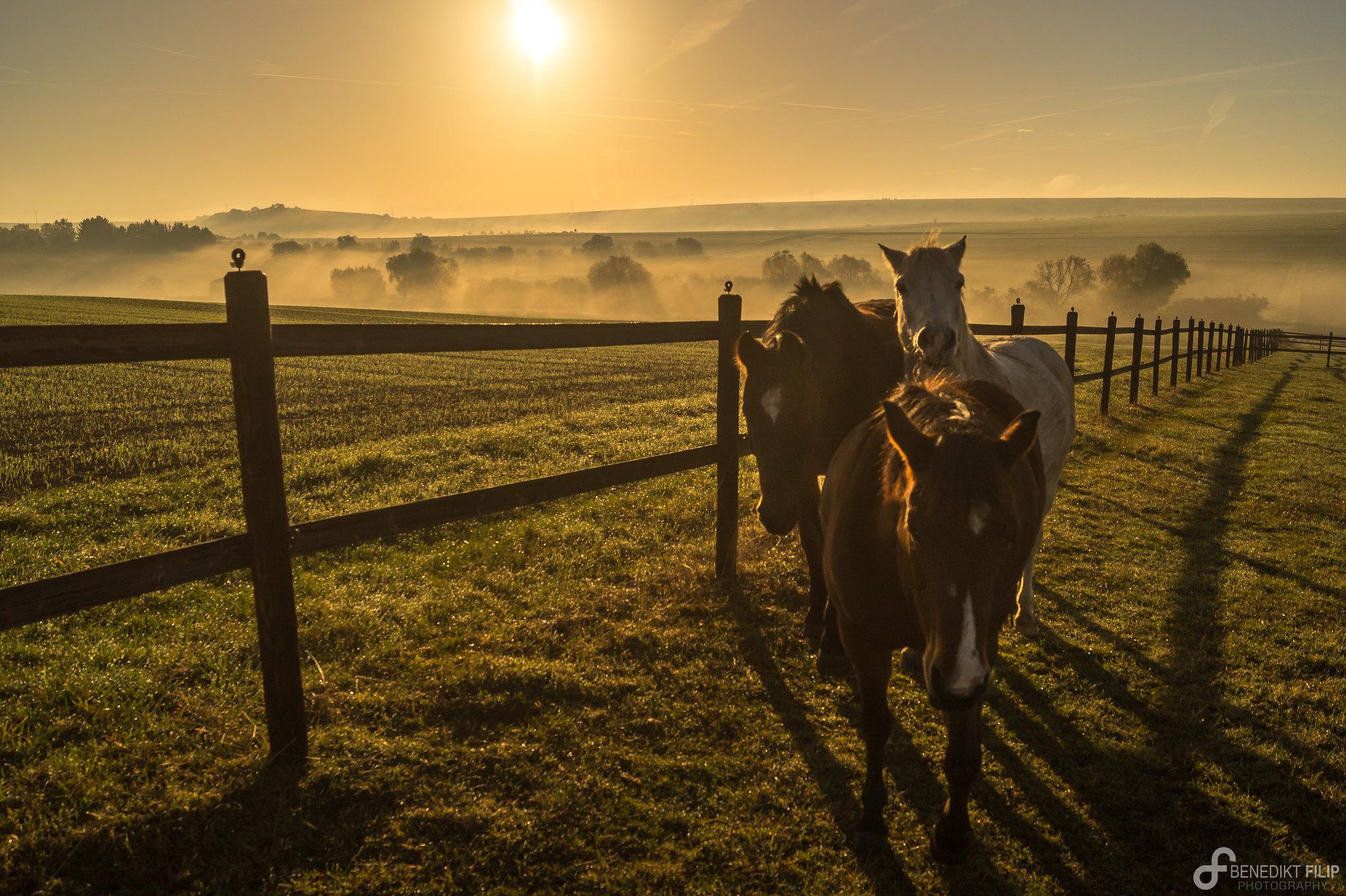 Fog at sunrise in autumn