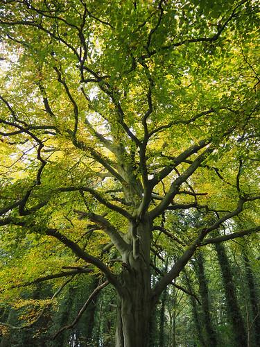 beechtree trees olympus1442 olympusem10markii