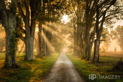 fineart trees lane sunrise sunrays ky driveway kentucky foggy daviess usa