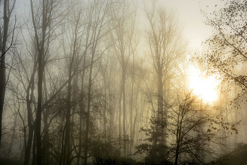morning usa fog sunrise landscape woods pennsylvania