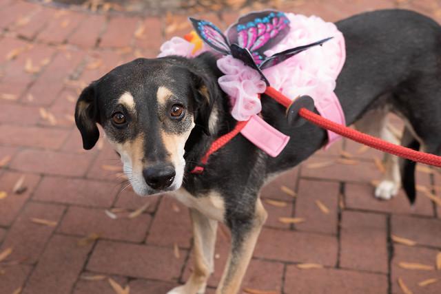 Shirlington Dog Treat or Treat-2.jpg