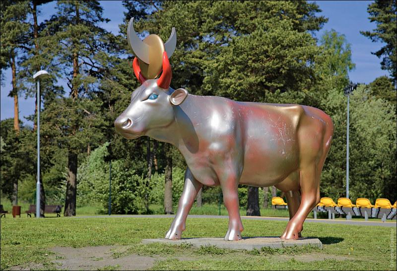 Корова золотистого солнца и серебристой луны, Вентспилс, Латвия