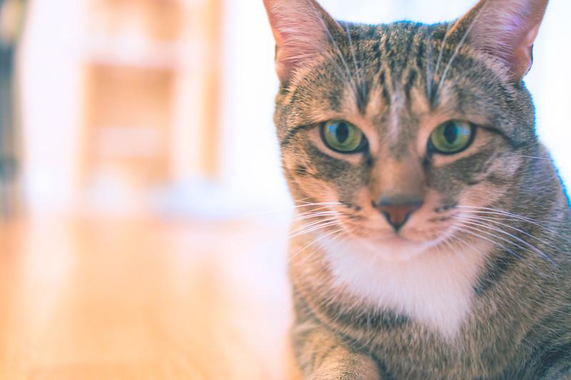 Ichi - my cat