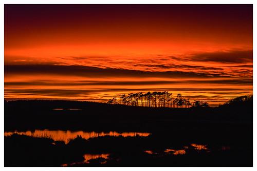 tamron nikon d810 sp 70200mm f28 di vc usd sweden valda sandö sverige halland kungsbacka naturreservat