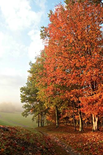 autumn trees eastforkstatepark ohio leaves landscape