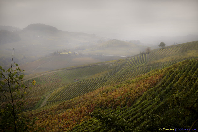 Langhe - Piedmont (Italy): Vineyards in Autumn