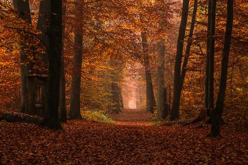 autumn fall forest herbst autumnleaves wald herbstlaub herbststimmung herbstfarben spazierweg hamburgsnorden