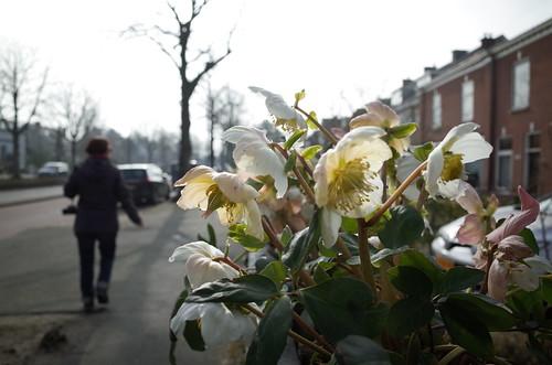 Leidschendam, March 2015