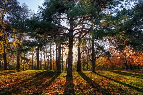 toronto ontario high park autumn cans2s sony a77
