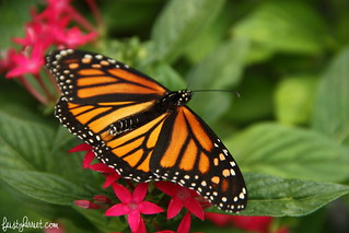 Boone Hall Butterfly Pavilion, South Carolina | by FeistyHarriet