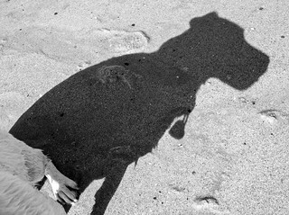 L'ombre d'un Jack Russel!!The shadow of a Jack Russel !!! | by Photo-LB