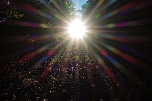 light sunset driveway sunburst sonydscrx100