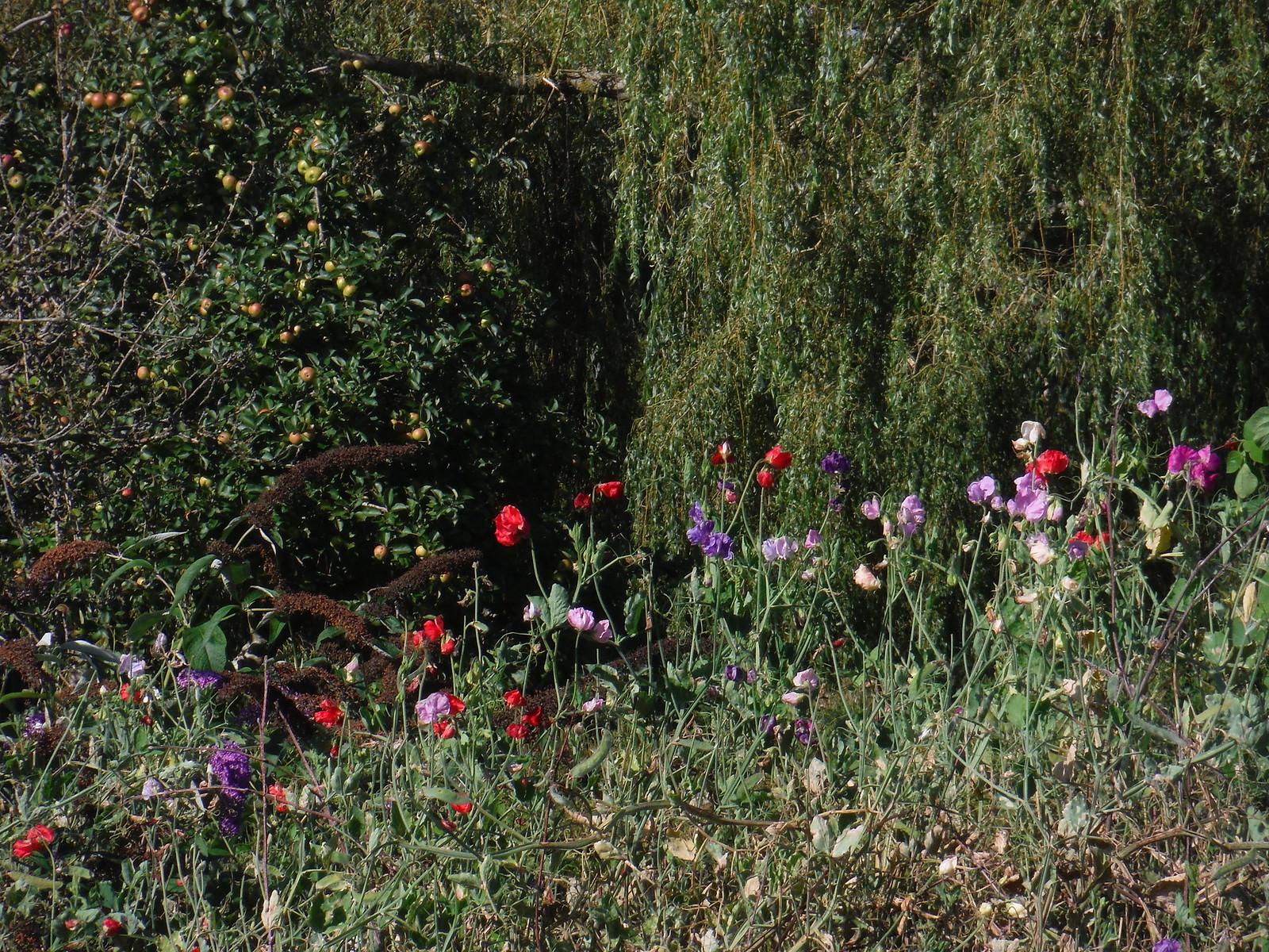 Garden Detail, Tisbury Mill (II) SWC Walk 248 Tisbury Circular via Hindon