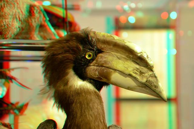 Rosse Neushoornvogel (Buceros) Museon 3D