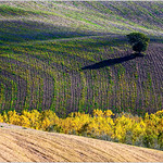 Terre d'Orcia
