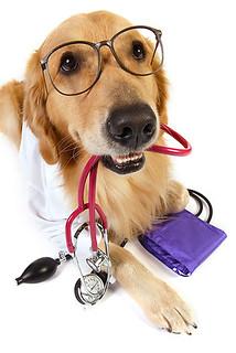 Szeptember 20.:Kisállatgyógyászati asszisztens-állatorvosi asszisztens tanfolyam indul!