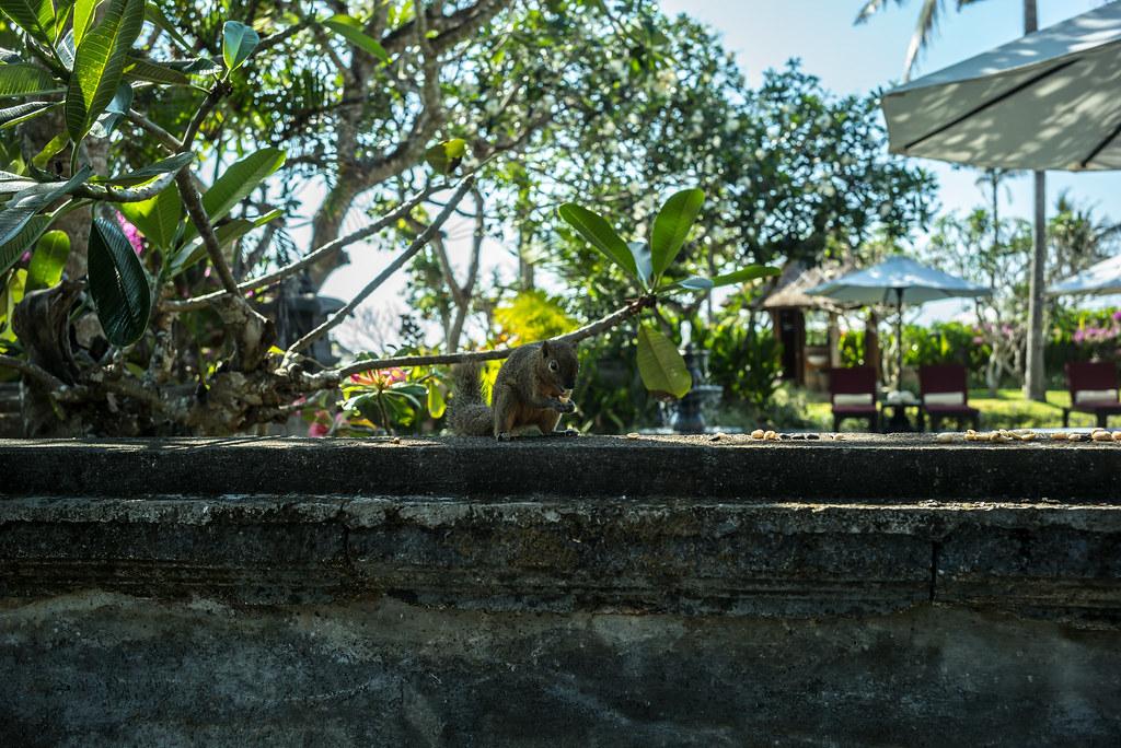 Image Result For Ayodya Resort Bali