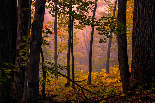 morning autumn trees color fall fog early woods october michigan ottawa westmichigan 2015 ottawacounty canon60d kevinpovenz ottawacountyparks grandravinesnorth
