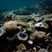 Snorkeling Borneo's Semporna Islands: Mataking and Sipadan