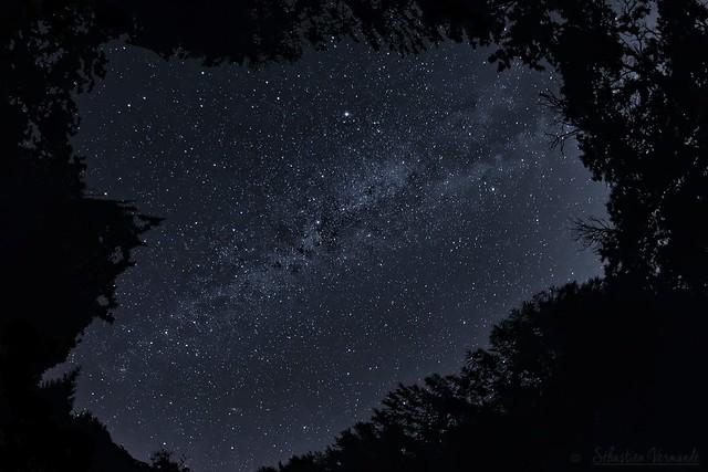 The Milky Way at the heart of the forest - La voie lactée au coeur de la forêt