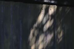 Abandoned woodlot shed - Scotsdale Farm, Halton Hills, Ontario.