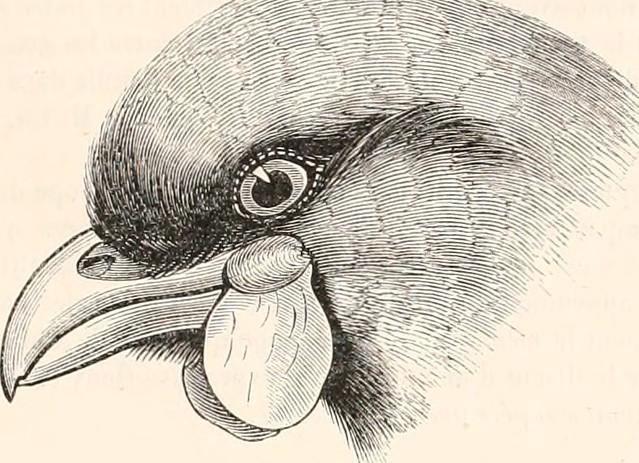 """Image from page 62 of """"Encyclopédie d'histoire naturelle; ou, Traité complet de cette science d'après les travaux des naturalistes les plus éminents de tous les pays et de toutes les époques: Buffon, Daubenton, Lacépède, G. Cuvier, F. Cuvier, Geoffroy Sai"""