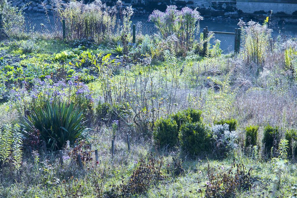 Verwilderter Garten An Der Zeiler Stadtmauer Entlang Liege Flickr