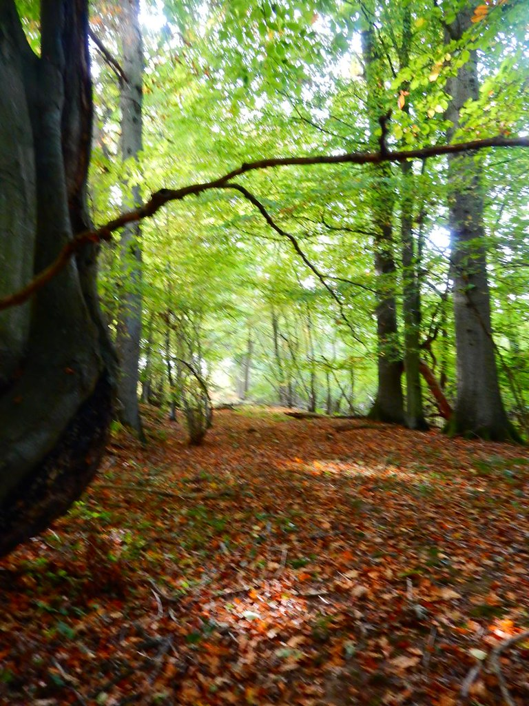 Woodland walk Witley to Haslemere