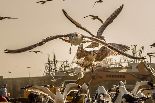 Essaouira 1-36