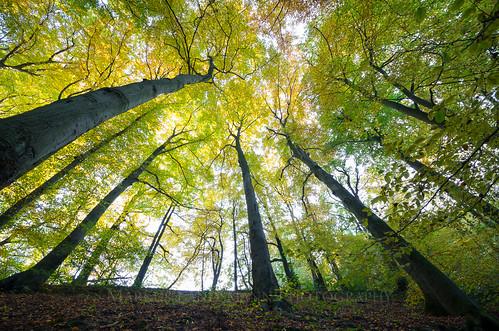 autumn trees nature leaves germany landscape deutschland forrest herbst natur wald blätter bäume leverkusen