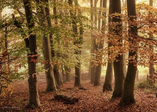 wood autumn trees england woodland unitedkingdom sony gb autumnal a99 sonyalpha andyhough southoxfordshiredistrict slta99v littlewittenhamwood andyhoughphotography sonyzeiss2470f28zassm