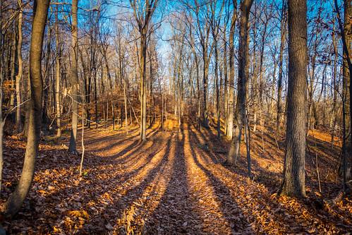 trees ny newyork woods autumnsun westchestercounty southsalem lewisboro leonlevypreserve sonydscrx100