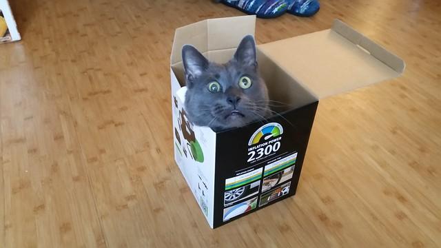 Waylon in a very small box.