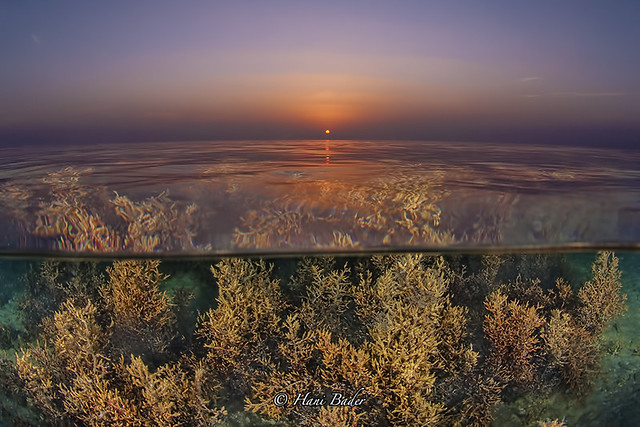 Aljazair Beach Kingdom Of Bahrain